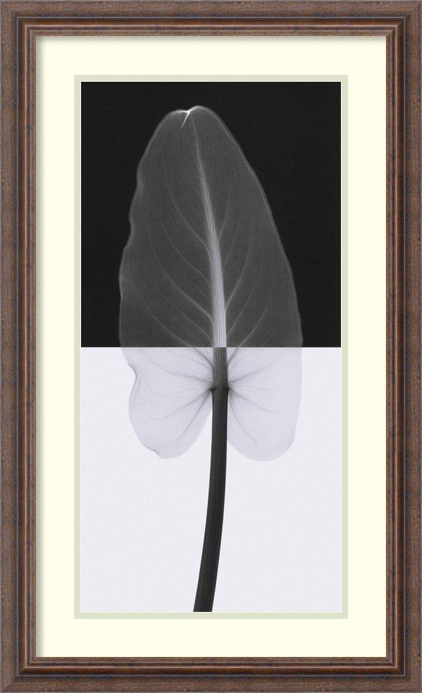 アートフレーム印刷' Calla Leaf I ' by Steven N。MEYERS Size: 18 x 30 (Approx), Matted ホワイト 1588198 Size: 18 x 30 (Approx), Matted Distressed Rustic Brown,mat:white B0134M5YZQ