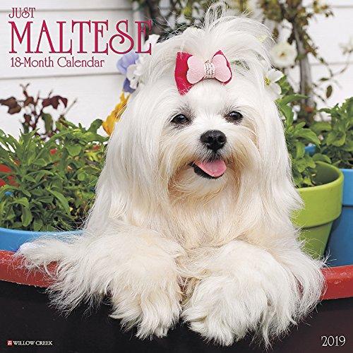 Best maltese wall calendar 2019