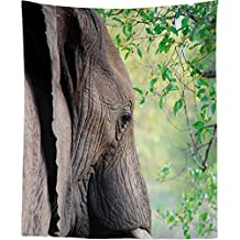 Westlake Art Wall Hanging Tapestry - Elephant Elephants - Photography Home Decor Living Room - 68x80in (x8z-61f-0a3)