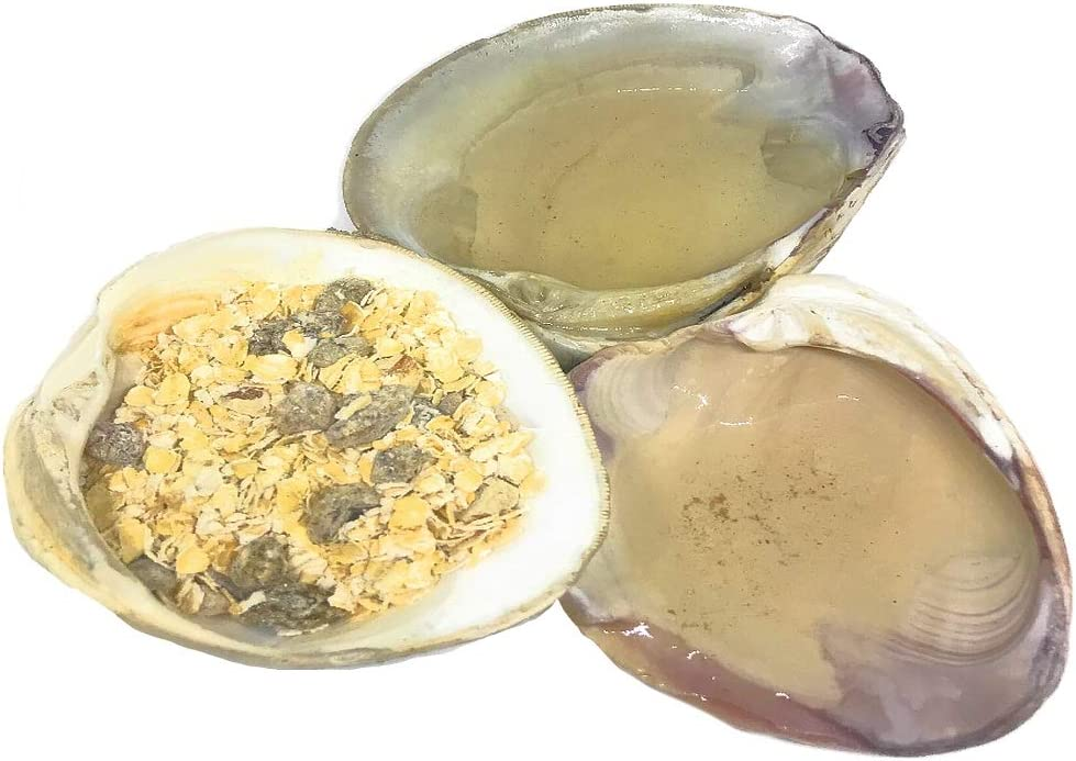 THE OTHER TIDE Corner Lagoon, Food Bowl, Water Dish - 3 Piece Natural Seashell Set - Terrarium Bowls for Hermit Crabs, Reptiles, Fish and Small Pets