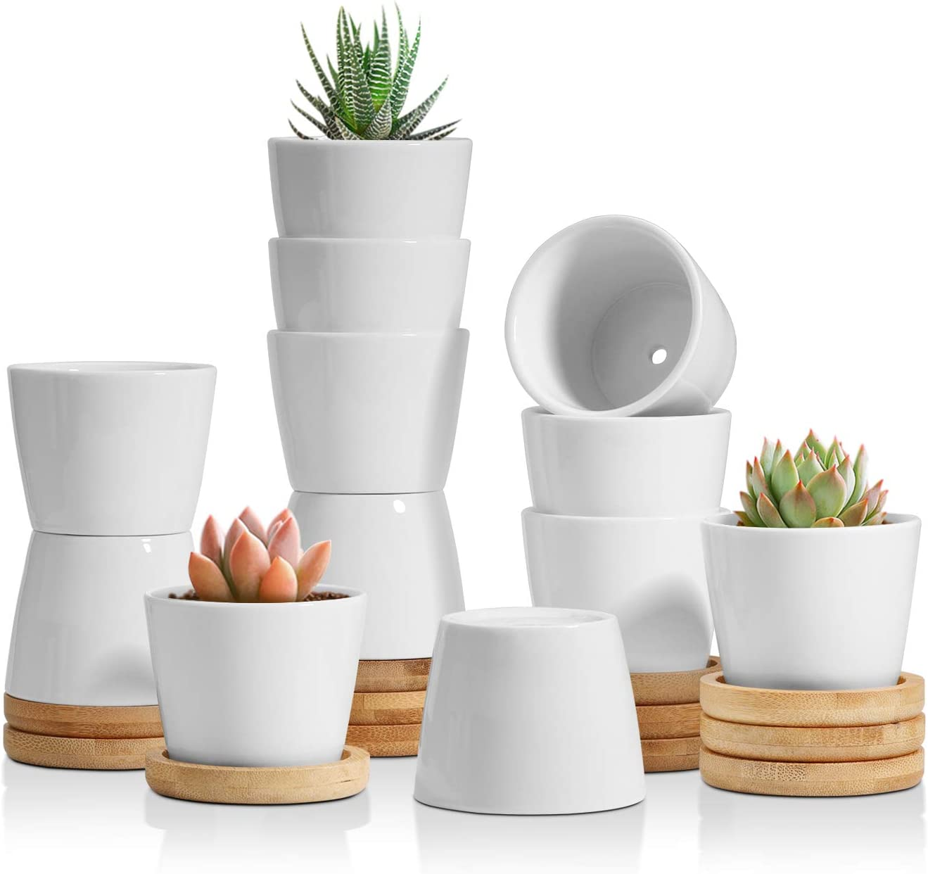 T4U 2.5 Inch Small White Succulent Planter Pots with Bamboo Tray Round Set of 12, Ceramic Succulent Air Plant Flower Pots Cactus Faux Plants Containers, White Modern Decor for Home and Office