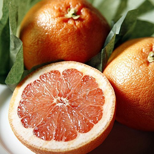 Sugar Red Grapefruit - 7 lbs - Citrus From the Fruit Company