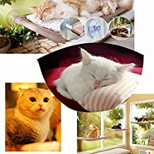 Marvelous 20 Best Window Seats For Cats As Seen On Tv Reviews On Andrewgaddart Wooden Chair Designs For Living Room Andrewgaddartcom
