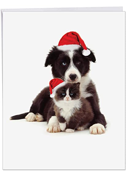 351de304ff480 Copy Cats Border Collie  Jumbo Christmas Card with Envelope 8.5 x 11 Inch -  Cute