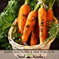 Package of 800 Seeds, Tendersweet Carrot (Daucus carota) Non-GMO Seeds By Seed Needs