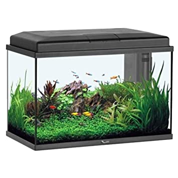 Acuario Aquastart 55 LED negro, 57 litros.: Amazon.es: Productos ...