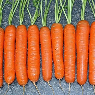 "100+ Vegetable Garden Seeds - Carrot - ""Little Finger"" Sweet & Crunchy Midgets! : Garden & Outdoor"