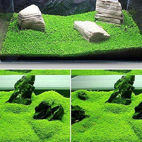 Aquarium Plants Seeds Aquatic Double Leaf Carpet Water
