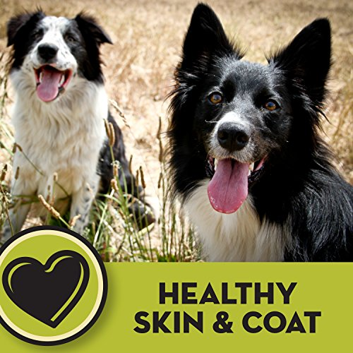 AvoDerm Natural Dry & Wet Dog Food, For Skin & Coat, Chicken & Rice Formula by AvoDerm (Image #4)