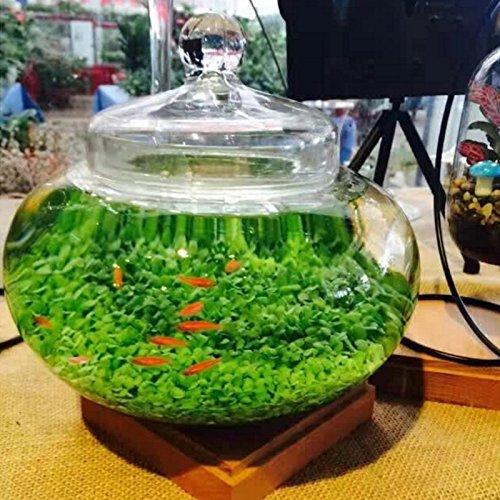 Planta para acuario con forma de césped de agua para decoración de jardín: Amazon.es: Hogar