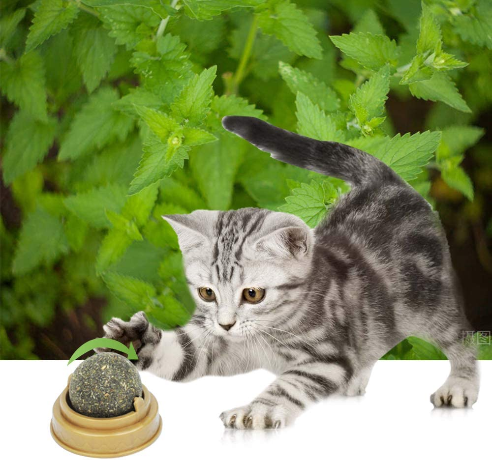 3cm//1 balls, Green LASPERAL Cat Snacks Candy Natural Catnip Cat Wall Stick-on Ball Toy Cat Treats Mint Leaf Ball Rotating Puzzle Balls for Little Cat Pet Supplies