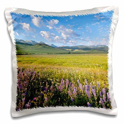 3dRose Danita Delimont - Montana - Wildflowers, Gallatin Mountain Range, Bozeman Montana - US27 CHA2510 - Chuck Haney - 16x16 inch Pillow Case (pc_92023_1)