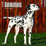 Dalmatians Dogs Wall Calendar 2017 {jg} Best Holiday Gift Ideas - Great for mom, dad, sister, brother, grandparents, , grandchildren, grandma, gay, lgbtq.