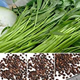 Best GENERIC Green Leaves - Plentree 100Pcs/Bag Aquatica Vegetables Seeds Water Green Leaf Review