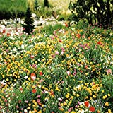Partial Shade Wildflower Seed Mix - 5 Lb
