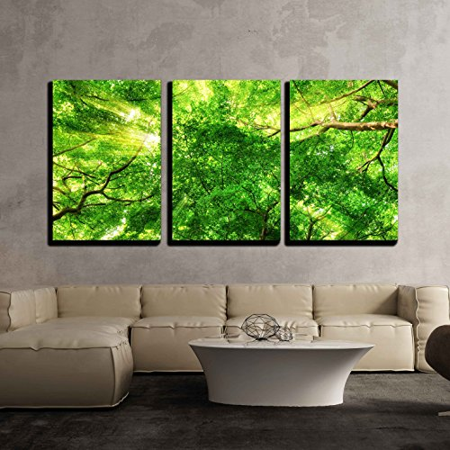 Sunrays Shining Through Green Leaves of High Treetops in a Beech Forest x3 Panels
