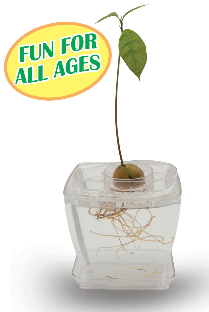 AvoSeedo Bowl Set Grow Your Own Avocado Tree, Evergreen, Perfect Avocado Tree Growing Kit for Every Avocado Lover with Plan Pot (Kit-Transparent/Transparent)