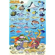 "Virgin Islands Reef Creatures Guide Franko Maps Laminated Fish Card 4"" x 6"""