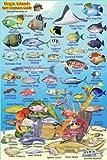 "Virgin Islands Reef Creatures Guide Franko Maps Laminated Fish Card 4"" x 6"""
