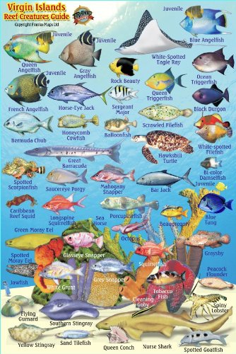 - Virgin Islands Reef Creatures Guide Franko Maps Laminated Fish Card 4