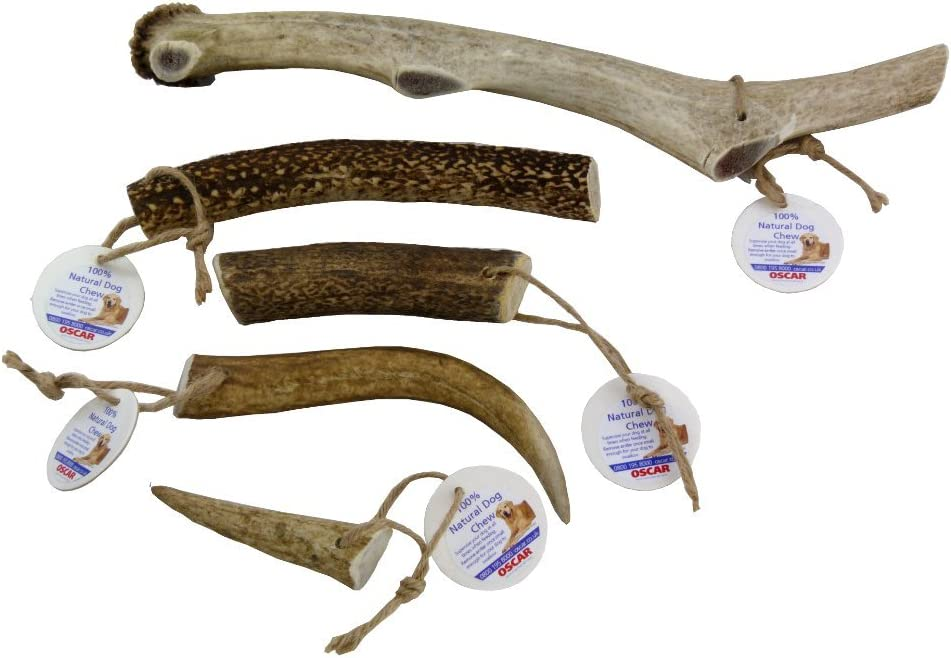 Oscar Extra Large Antler Chew Treat for dogs