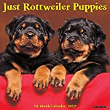 Just Rottweiler Puppies 2017 Wall Calendar (Dog Breed Calendars)