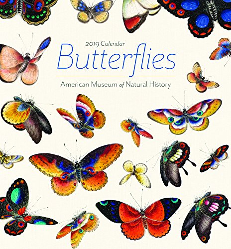 Butterfly Calendar - Butterflies 2019 Calendar