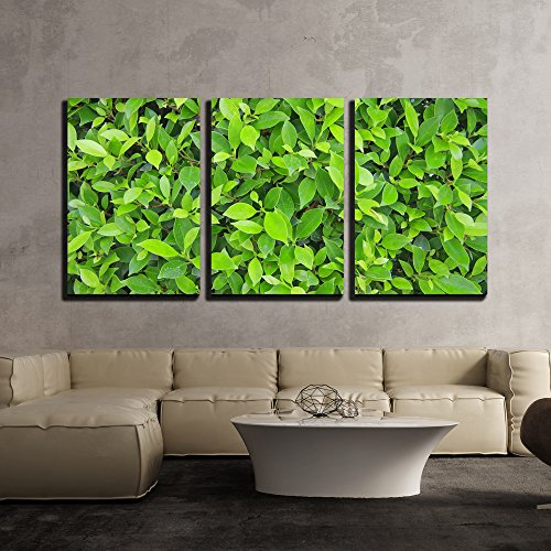 wall26 - 3 Piece Canvas Wall Art - Green Leaves Wall Background - Modern Home Decor Stretched and Framed Ready to Hang - 16