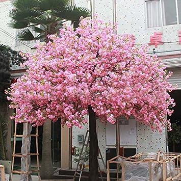 10 Pcs Red Japanese Cherry Blossoms Seeds Courtyard Garden Bonsai
