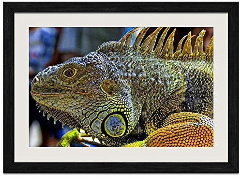 Iguana Grain - Iguana - Art Print Wall Black Wood Grain Framed Picture(24x16inch)