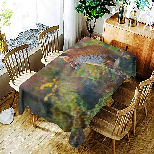 XXANS Tablecloth for Kids/Childrens,Fox,Young Red Fox Listening to Something in Woodland Forest Wildlife Predator,Dinner Picnic Table Cloth Home Decoration,W54x72L Pale Brown White Green]()
