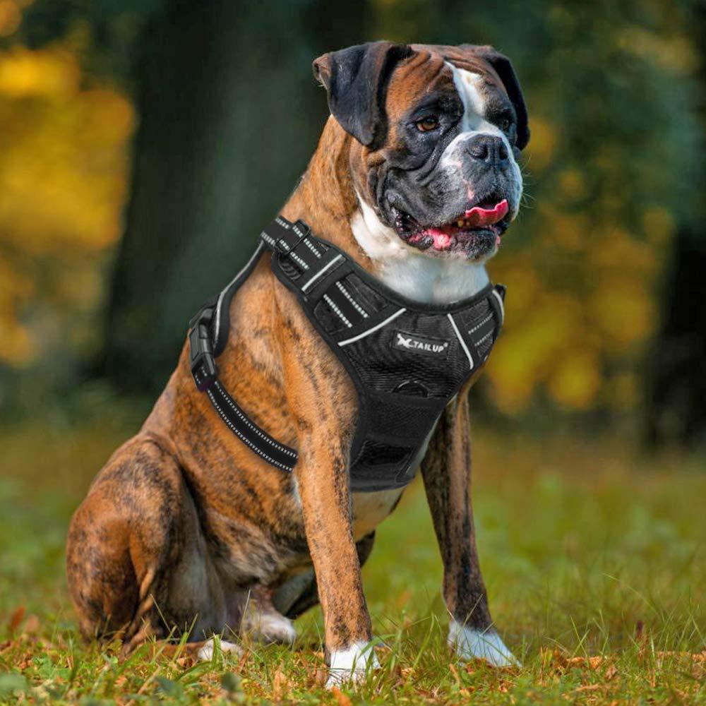 Arnés de Perro para Mascotas, sin tirones, con luz LED para ...