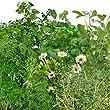 Medicinal Herb Seed Kit for Aerogarden (9-pod)