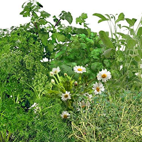 Aerogarden Medicinal Herb Seed Kit