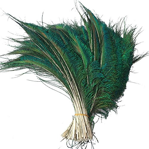 Sowder Natural Peacock Sword Feathers 10-15 Inches for Wedding Home Decoration Pcak of 30
