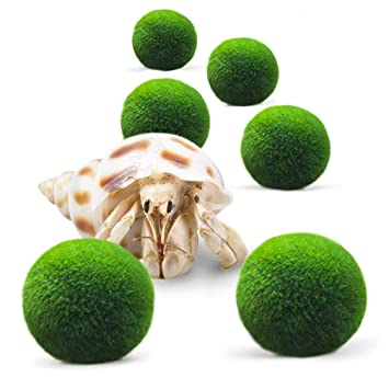Luffy 6 Nano Marimo Moss Balls For Children Vibrant Green Living