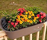 "Bloem Modica Deck Rail Planter 12"" Honey Dew"