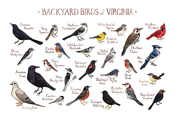 Backyard Birds Of Virginia Field Guide Art Print