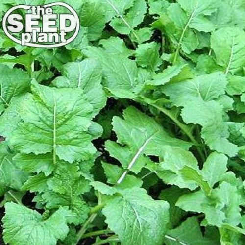 (Seven Top Turnip Seeds - 500 SEEDS)