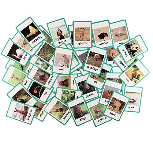 Educational Live Picture Cards of Wild animals&insects 46 pc. set for Children ages Preschool Pre-K, thru Grade School for Parent, Teachers, Therapists to Help develop early English Language Skills