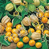 Organic Vegetable Tomatillo seeds Physalis Strawberry Peruvian. 100 SEEDS.