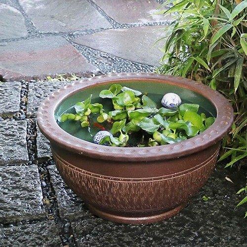 信楽焼 18号トチリワン型すいれん鉢 睡蓮鉢 スイレン鉢 金魚鉢 水鉢 陶器 su-0173 (直径560×高さ290ミリ(外寸)) B01NBO1WSC   直径560×高さ290ミリ(外寸)