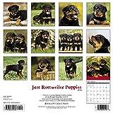 Just Rottweiler Puppies 2018 Calendar