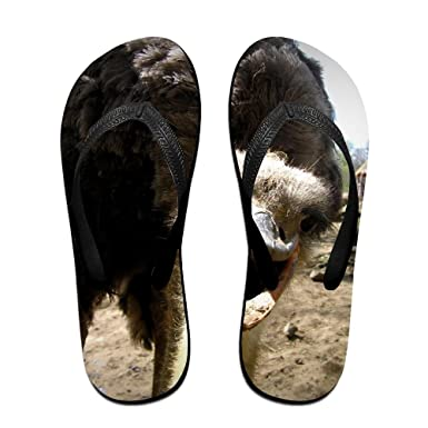 Couple Flip Flops Funny Ostrich Print Chic Sandals Slipper Rubber Non-Slip House Thong Slippers