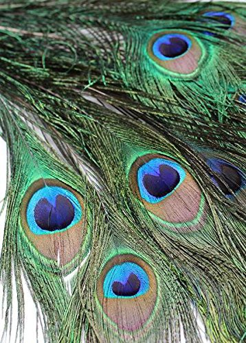 Afloral Peacock Feathers - 12 Pack - 30