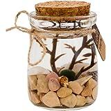 OMEM Aegagropila linnaei Moss Balls Glass Aquarium Kit