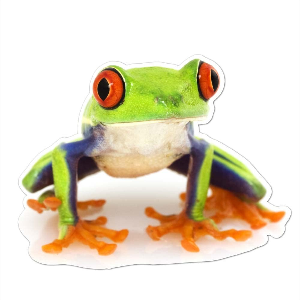 Red Eyed Tree Frog Vinyl Decal -Indoor and Outdoor use!