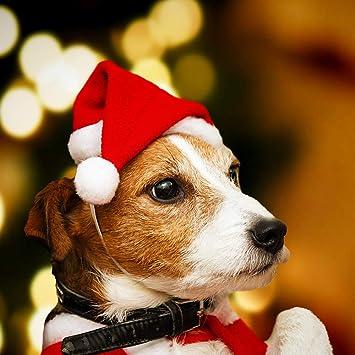 Vercico - Juego de Accesorios para Mascotas, Gorro de Navidad, para Gato y Mini Perro, Gorro de Papá Noel, Color Rojo: Amazon.es: Productos para mascotas