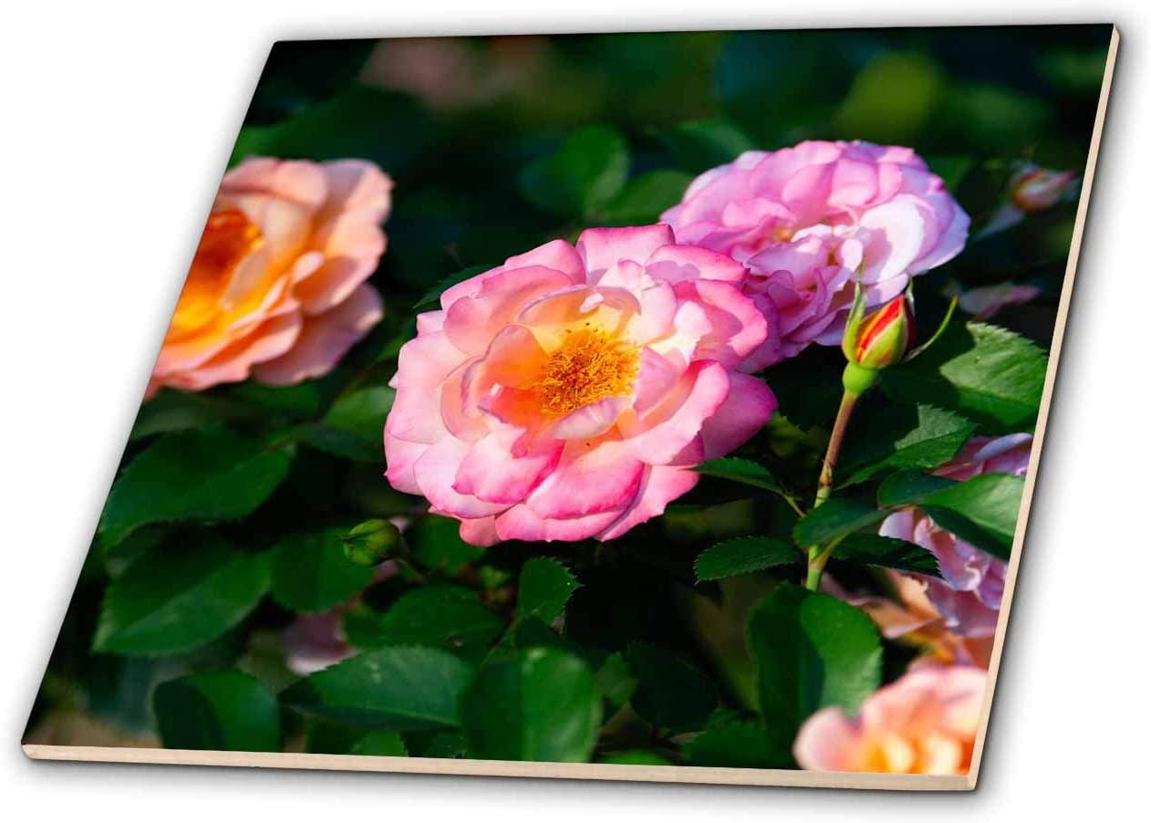 Sunny Day in The Garden Closeup View T-Shirts Flowers 3dRose Alexis Photography Pink Decorative Flowers