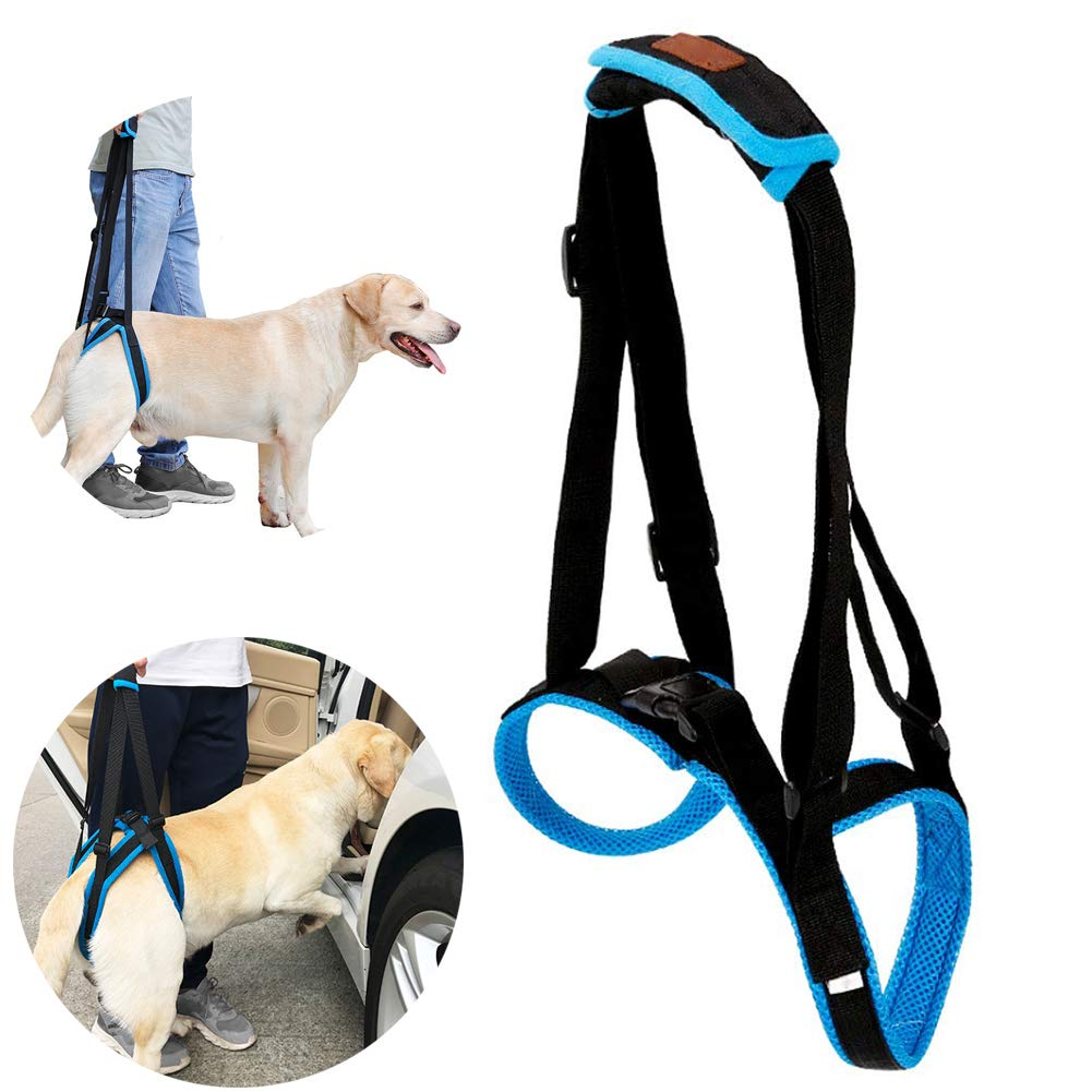 L Pet Support Sling Adjustable Breathable Mesh Padded Sling Straps, Dog Lift Harness for Back Legs Canine Rehabilitation for Injuries Arthritis Weak hind Legs & Joints, bluee,L